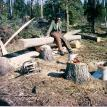 Milled log for log cabin on Alaskan homestead